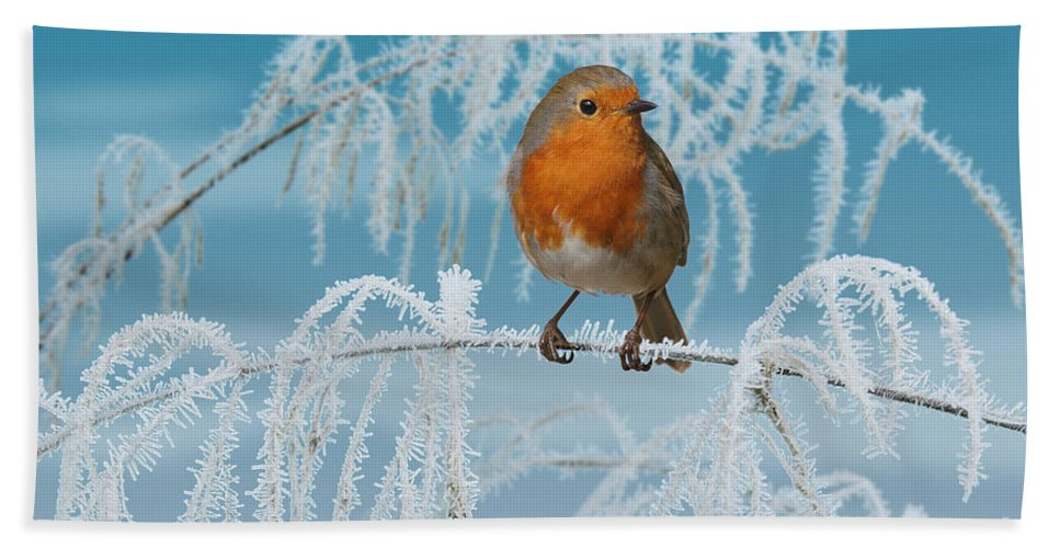 European Robin Hand Towel featuring the photograph Robin On Frosty Grass by Warren Photographic
