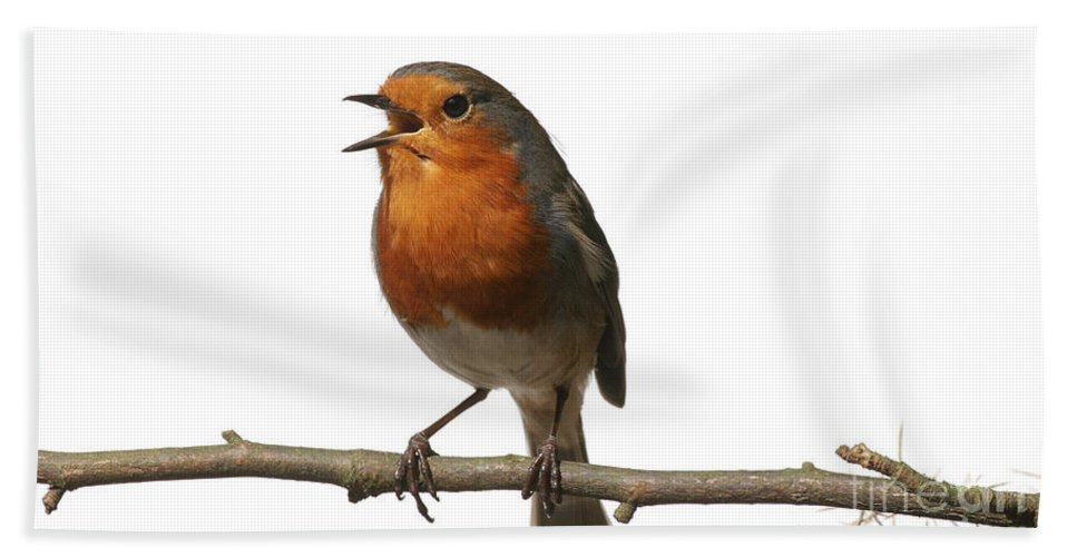 European Robin Hand Towel featuring the photograph Robin Singing On Branch by Warren Photographic