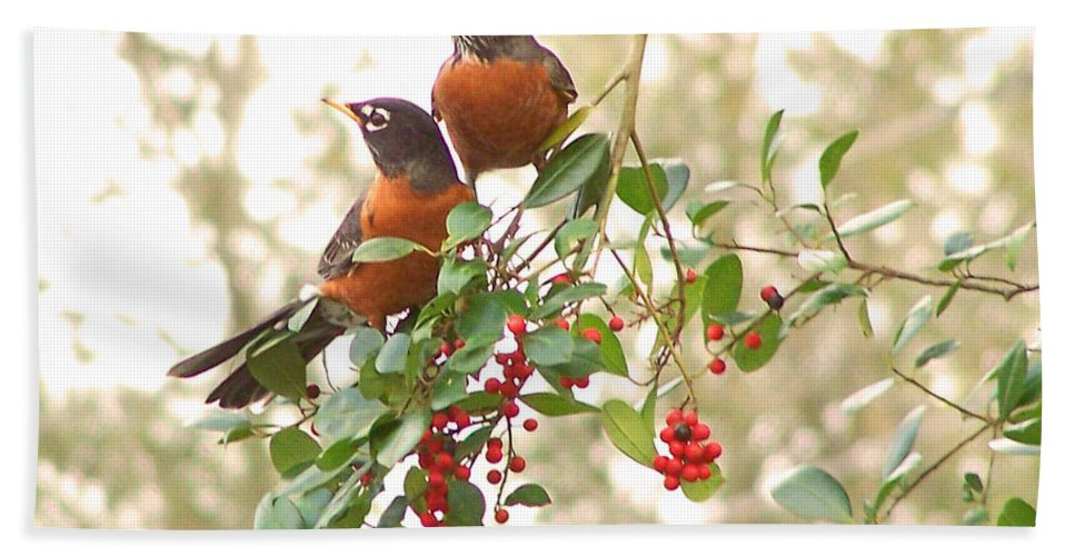Nature Hand Towel featuring the photograph Robins In Holly by Peg Urban