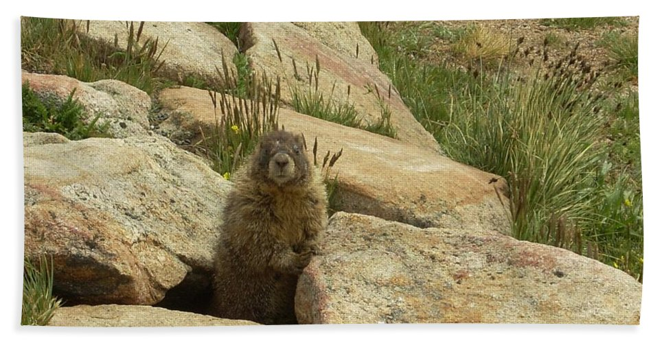 Critter Hand Towel featuring the photograph Rock Critter by Sara Stevenson