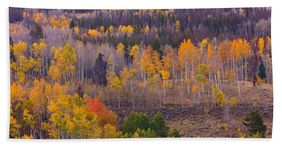 Trees Bath Sheet featuring the photograph Rocky Mountain Autumn View by James BO Insogna