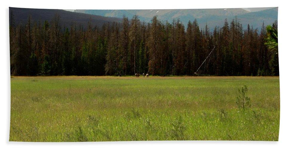 Elk Bath Sheet featuring the photograph Rocky Mountain Elk by Sara Stevenson