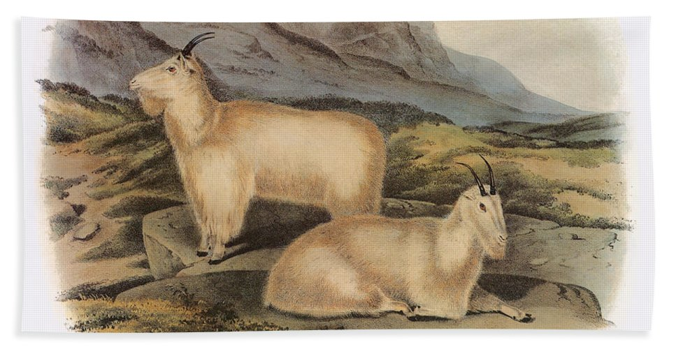Aod Hand Towel featuring the photograph Rocky Mountain Goats by Granger