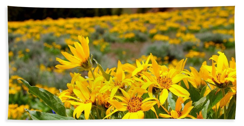 #wyoming#flower#rockymountainhelianthella#mountains#color Bath Sheet featuring the photograph Rocky Mountain Helianthella by Gemdelin Jackson