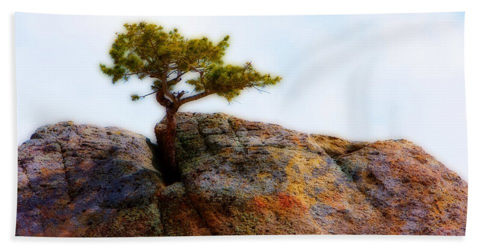 Colorado Hand Towel featuring the photograph Rocky Mountain Tree by James BO Insogna