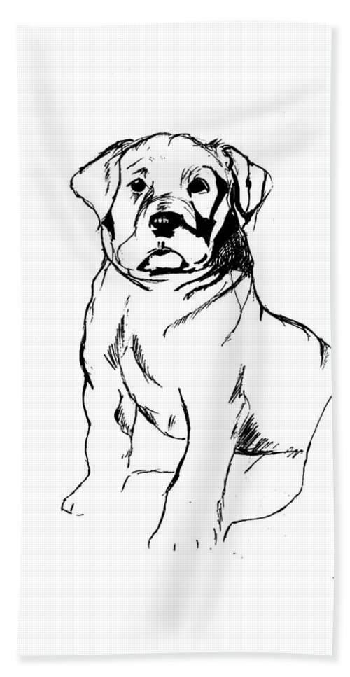 Fat Little Baby Lab Bath Sheet featuring the drawing Roly Poly by Charme Curtin