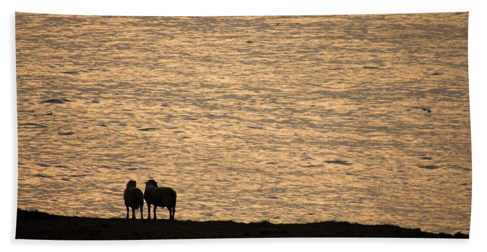 Sheep Bath Sheet featuring the photograph Romancing The Sheep by Donna Blackhall