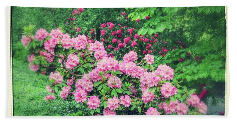 Rhododendrons Bath Sheet featuring the photograph Romantic Rhododendrons by Carol Groenen