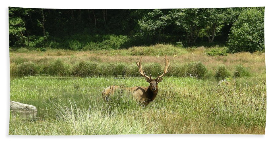 California Hand Towel featuring the photograph Roosevelt Elk 2 by Rich Bodane