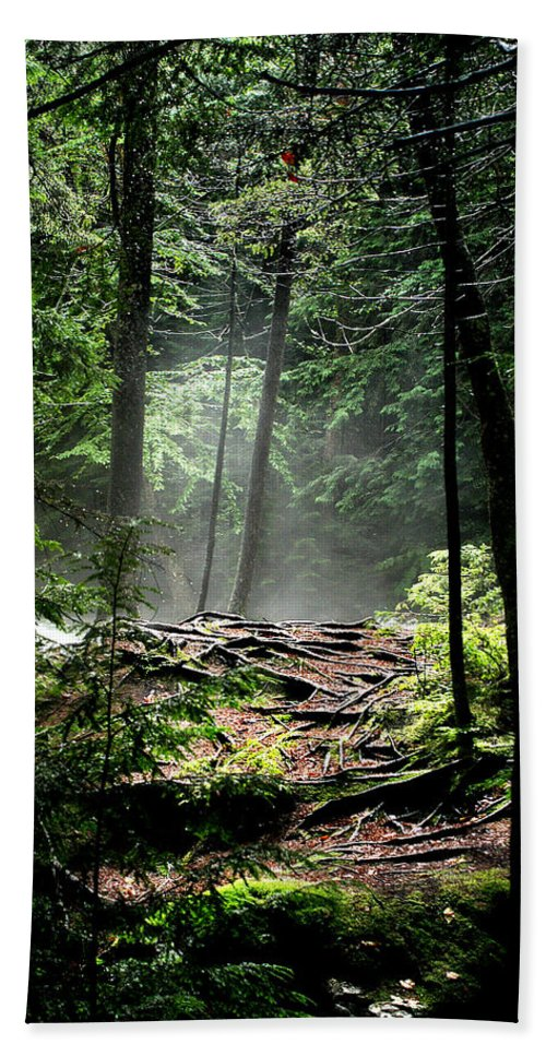 Woods Bath Sheet featuring the photograph Roots by Greg Fortier