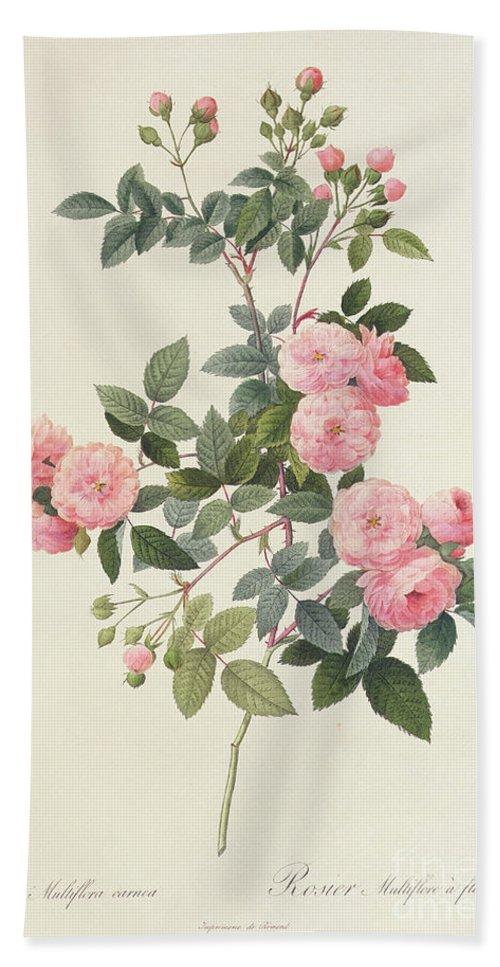 Rosa Bath Towel featuring the drawing Rosa Multiflora Carnea by Pierre Joseph Redoute
