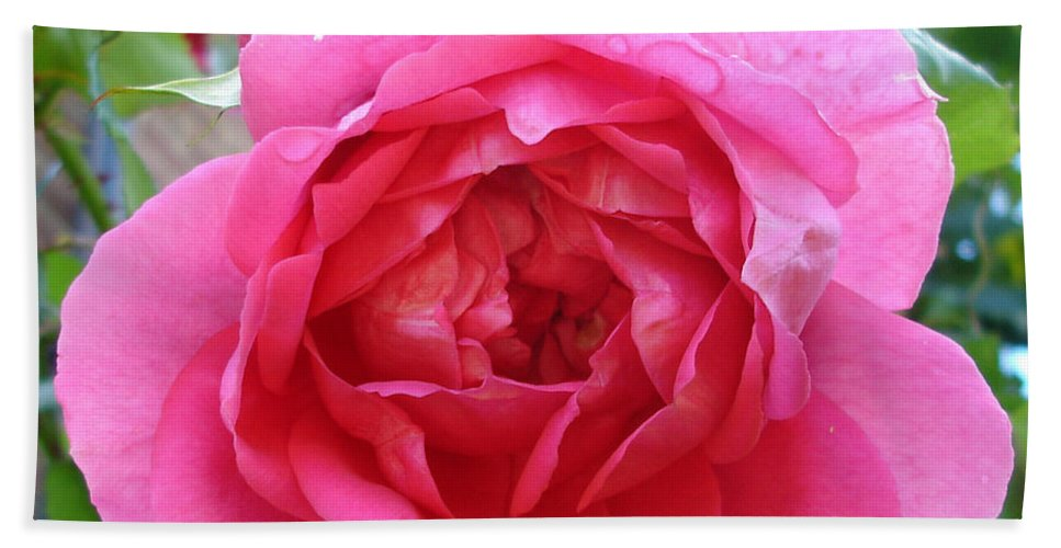 Rose Hand Towel featuring the photograph Rosa Zephrine by Susan Baker