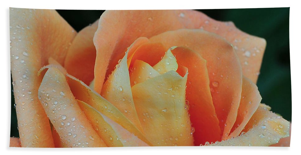 Roses Bath Sheet featuring the photograph Rose 37 by Terri Winkler
