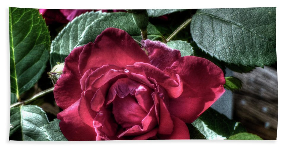 Red Rose Bath Sheet featuring the photograph Rose And Bud by Leslie Montgomery