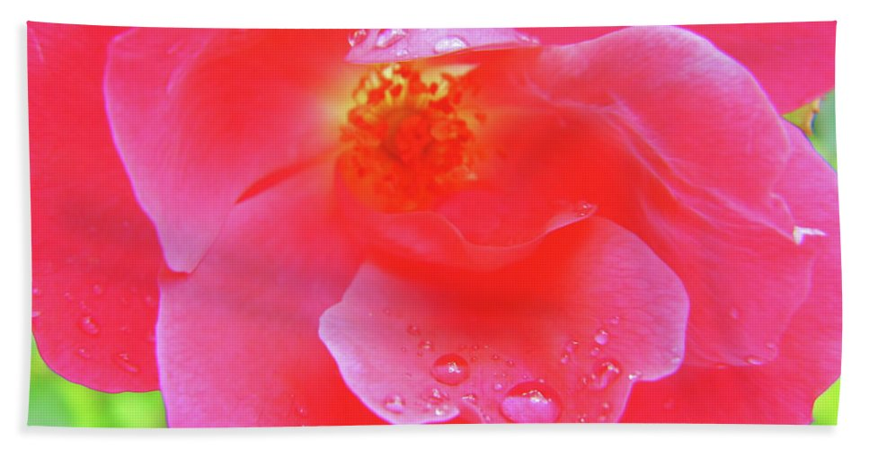 Roses Hand Towel featuring the photograph Rose And Raindrops by D Hackett