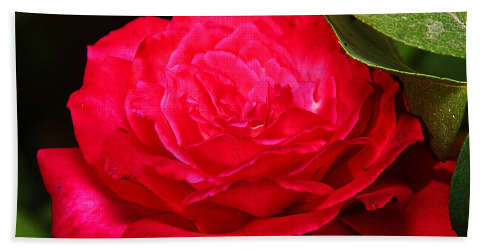 Flower Hand Towel featuring the photograph Rose by Anthony Jones