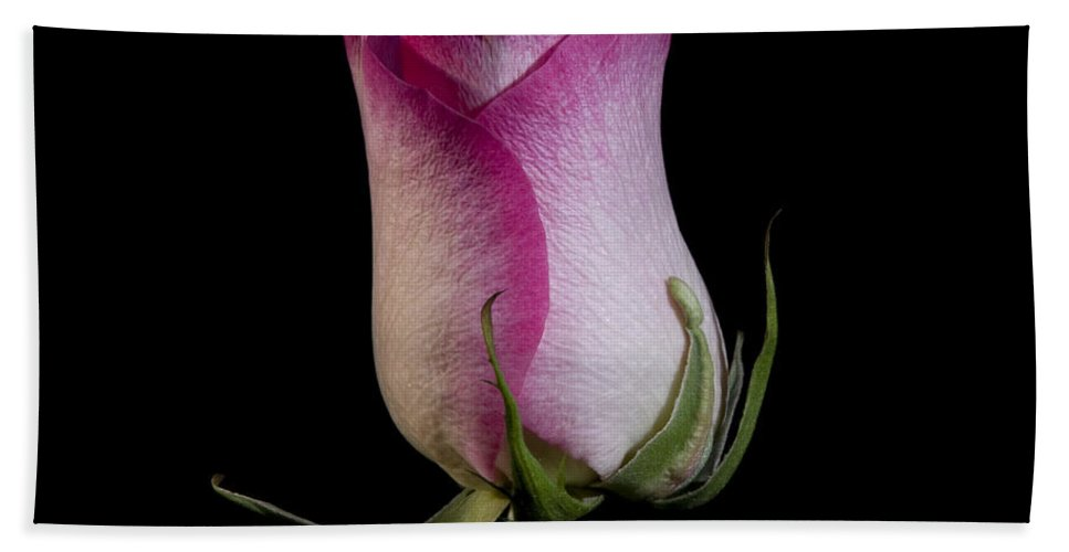 Beauty In Nature Bath Sheet featuring the photograph Rose by Avril Christophe