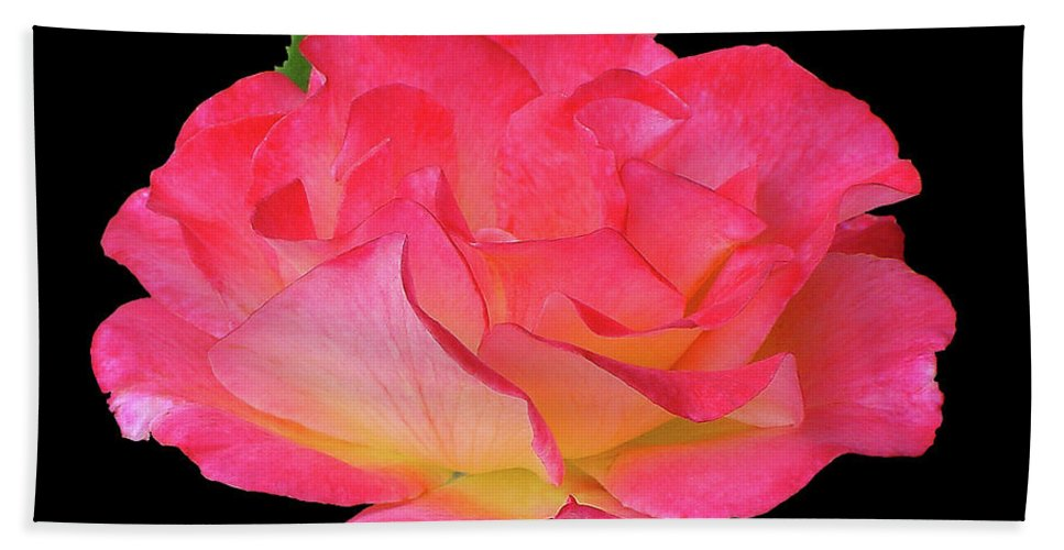 Cutout Hand Towel featuring the photograph Rose Blushing Cutout by Shirley Heyn