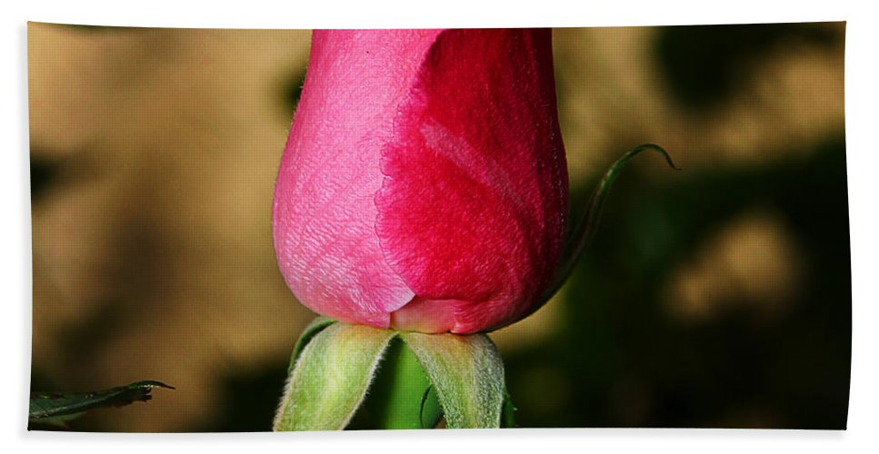 Rose Hand Towel featuring the photograph Rose Bud by Anthony Jones