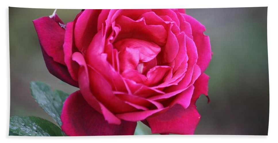 Floral Bath Sheet featuring the photograph Rose by Donna Walsh