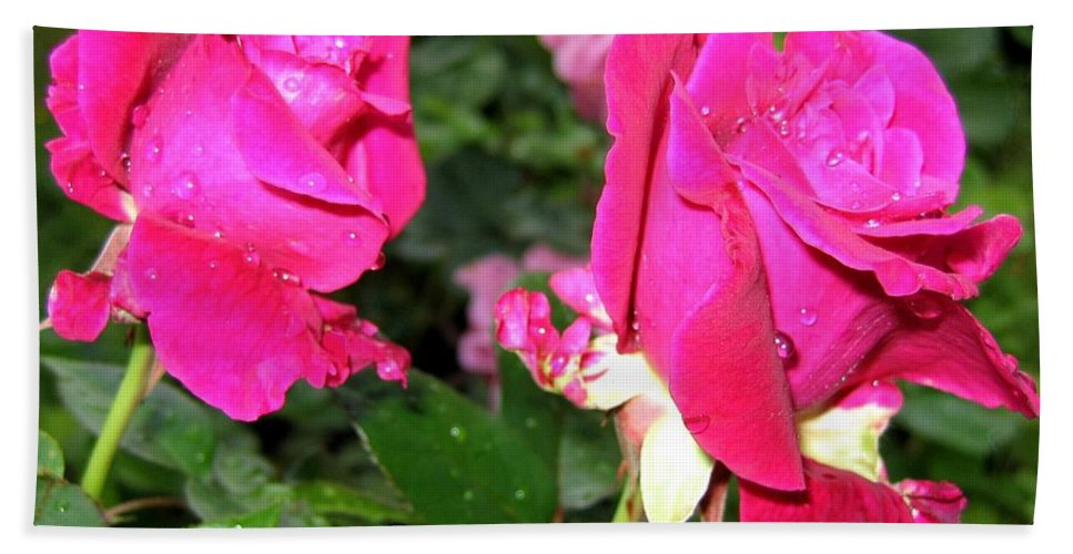 Roses Hand Towel featuring the photograph Rose Duo by Will Borden