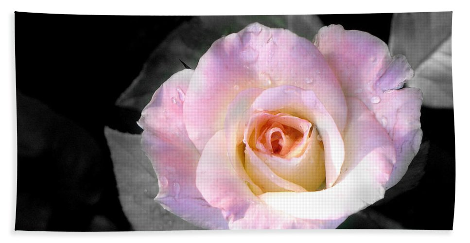 Princess Diana Rose Hand Towel featuring the photograph Rose Emergance by Steve Karol