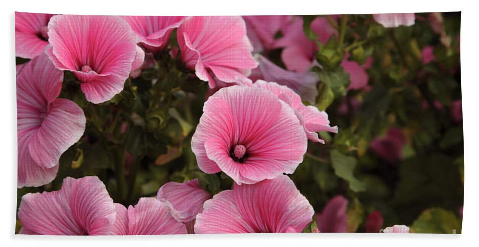 New England Bath Sheet featuring the photograph Rose Mallow Flowers by Erin Paul Donovan