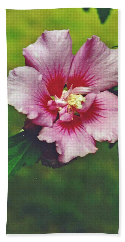 Rose Of Sharon Blossom Hand Towel featuring the photograph Rose Of Sharon Blossom by Sharon Barone