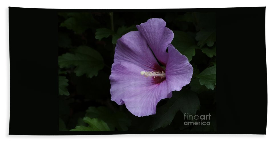 Flower Hand Towel featuring the photograph Rose Of Sharon - Hibiscus Syriacus by Ann Horn