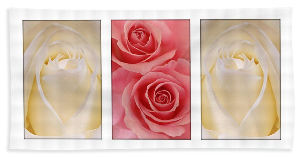 Rose Hand Towel featuring the photograph Rose Series by Jill Reger
