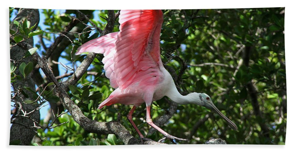 Spoonbill Bath Sheet featuring the photograph Roseate Spoonbill In Flight by Barbara Bowen