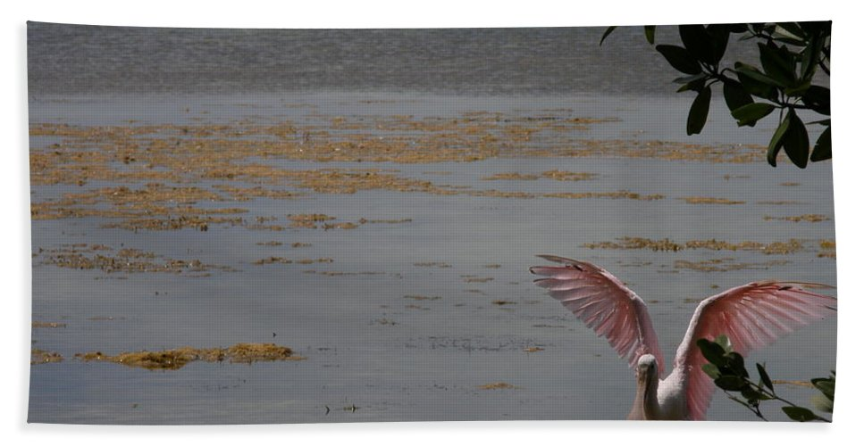 Roseate Spoonbill Hand Towel featuring the photograph Roseate Spoonbill by Kimberly Mohlenhoff