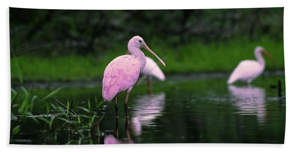 Roseate Spoonbill Standing In Shallow Water Hand Towel featuring the photograph Roseate Spoonbill by Sally Weigand