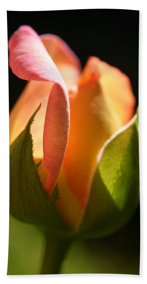 Rosebud Hand Towel featuring the photograph Rosebud by Ralph A Ledergerber-Photography