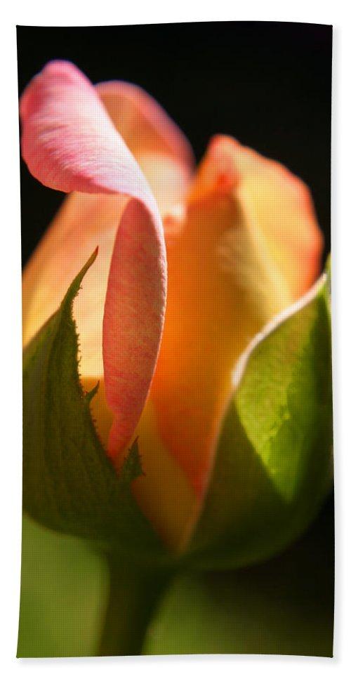 Rosebud Bath Towel featuring the photograph Rosebud by Ralph A Ledergerber-Photography
