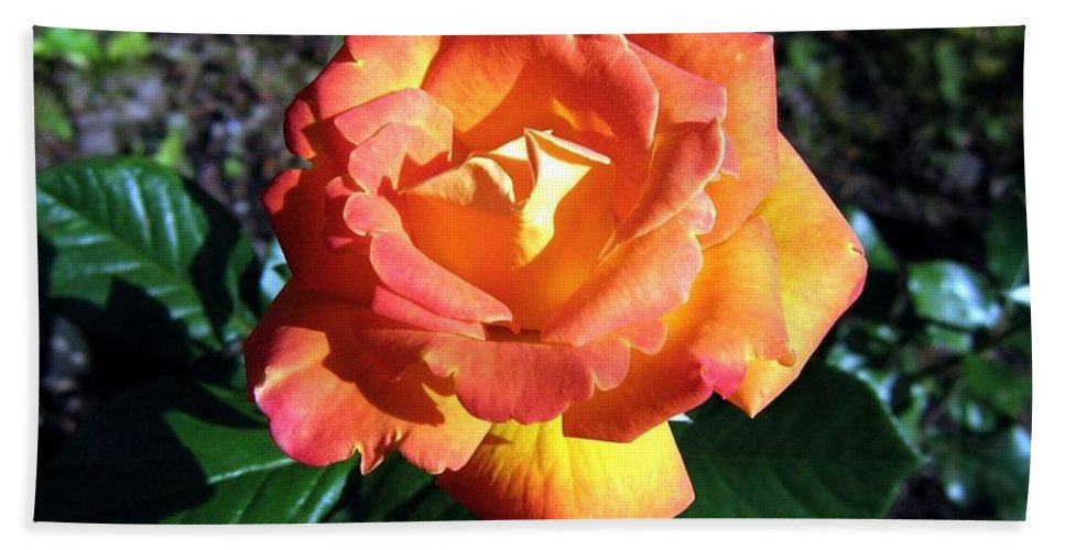 Rose Hand Towel featuring the photograph Roses 1 by Will Borden