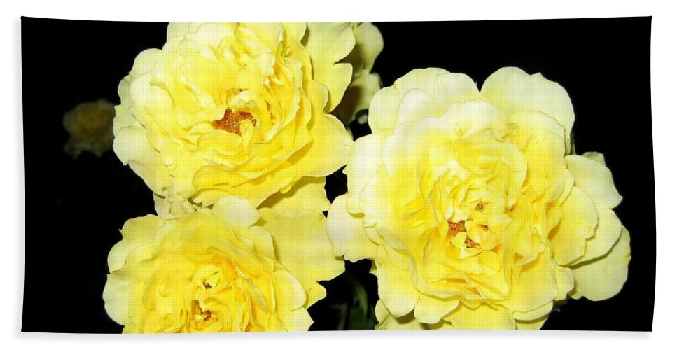 Roses Hand Towel featuring the photograph Roses 11 by Will Borden