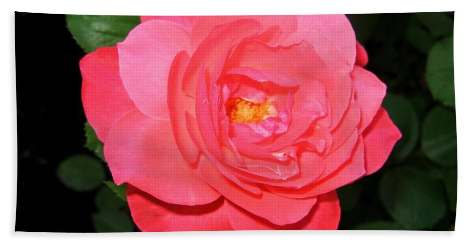 Rose Bath Sheet featuring the photograph Roses 12 by Will Borden