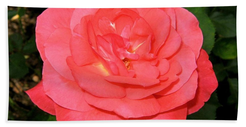 Rose Bath Sheet featuring the photograph Roses 3 by Will Borden