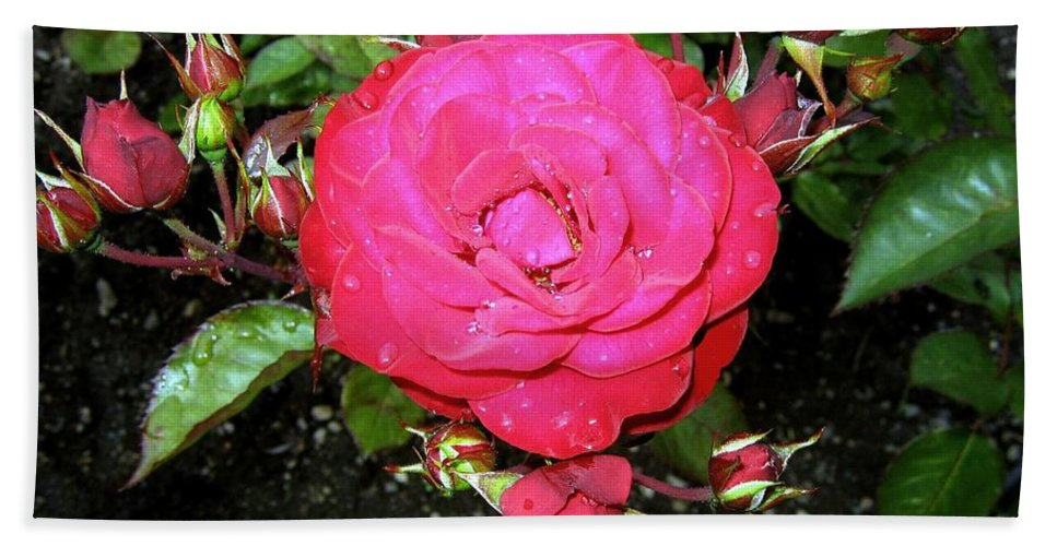 Rose Bath Sheet featuring the photograph Roses 5 by Will Borden
