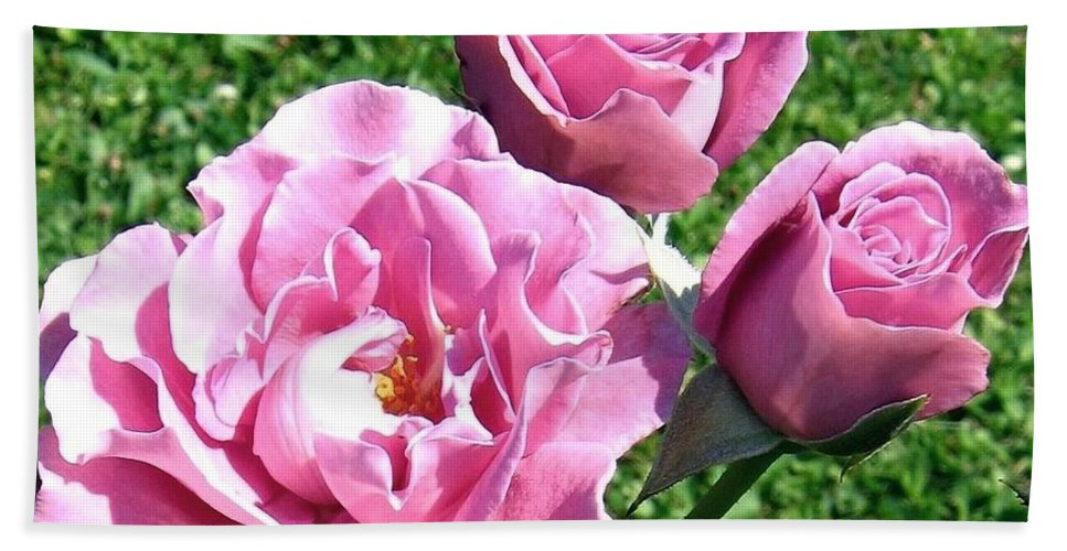 Roses Bath Sheet featuring the photograph Roses 6 by Will Borden