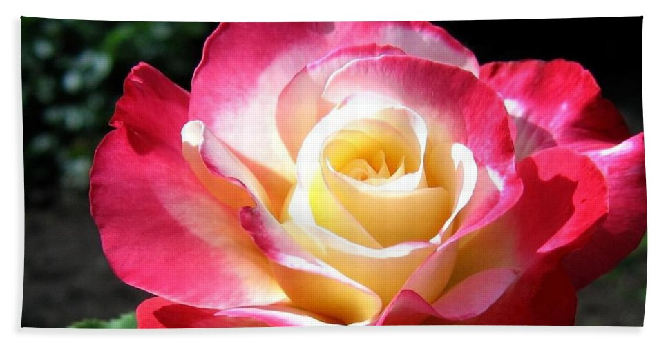 Rose Bath Sheet featuring the photograph Roses 7 by Will Borden