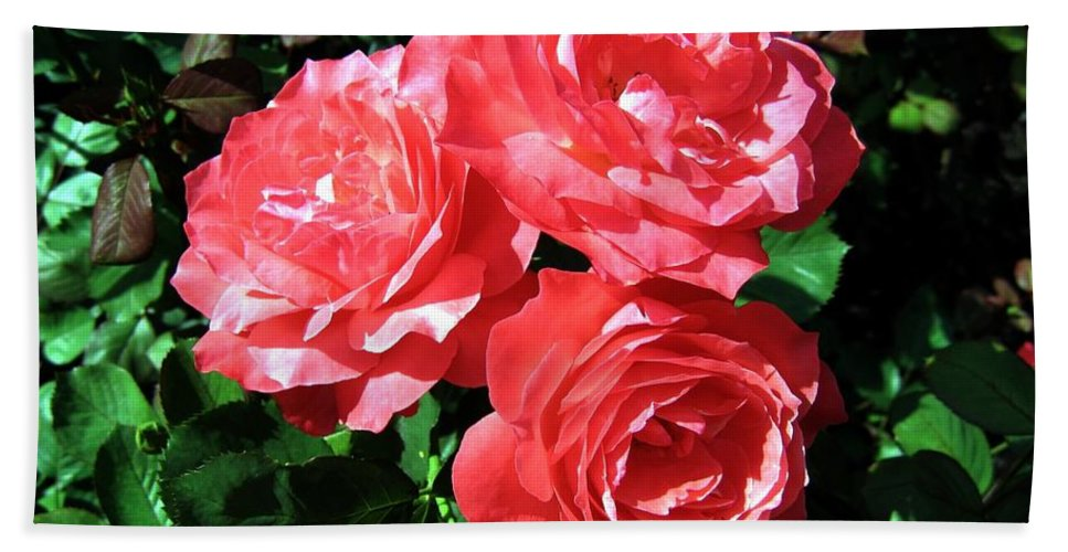 Roses Bath Sheet featuring the photograph Roses 9 by Will Borden