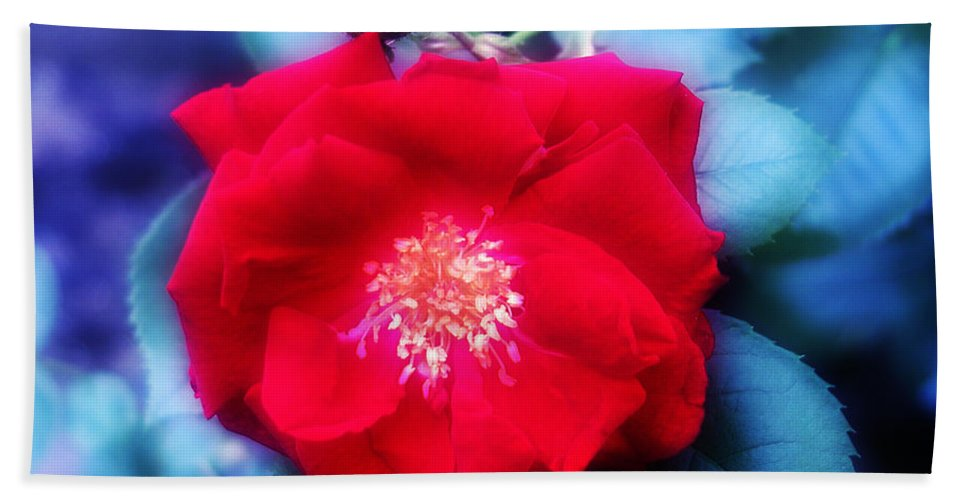 Red Hand Towel featuring the photograph Roses Are Red by Bill Cannon