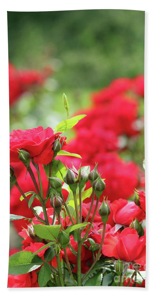 Rose Hand Towel featuring the photograph Roses Garden Spring Scene by Goce Risteski
