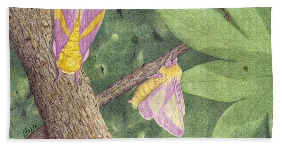 Colored Pencil Hand Towel featuring the drawing Rosy Maple Moth Gathering by Diana Hrabosky