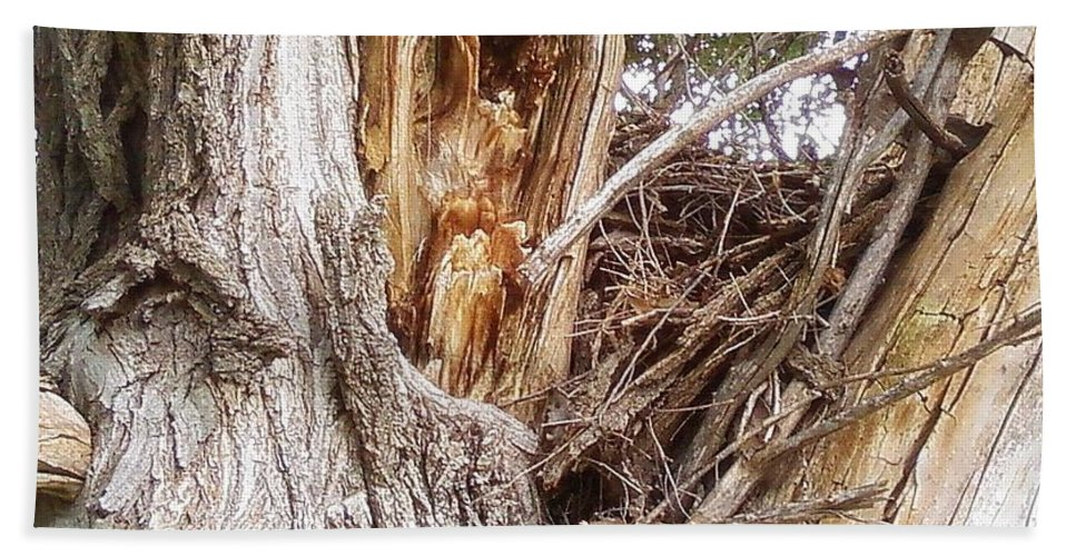 Tree Limbs Bark Hand Towel featuring the photograph Rough Tree by Cindy New