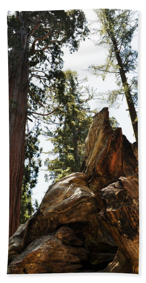 Sequoia National Park Bath Sheet featuring the photograph Round Meadow Giant Sequoia by Kyle Hanson
