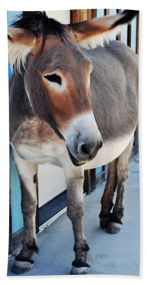 Route 66 Hand Towel featuring the photograph Route 66 Burro Oatman by Kyle Hanson