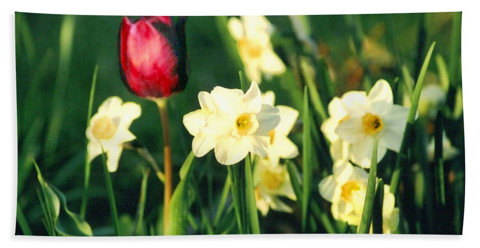 Tulips Hand Towel featuring the photograph Royal Spring by Steve Karol